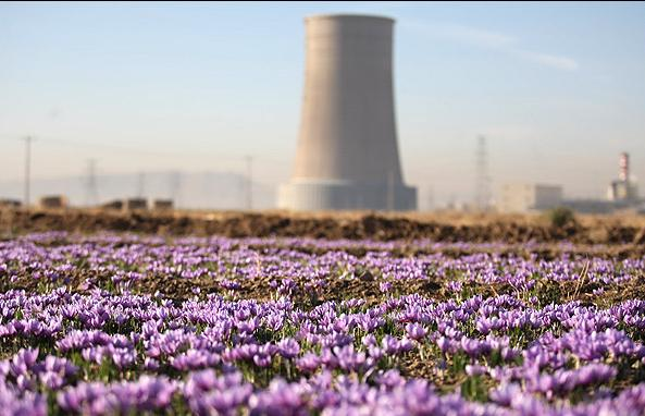 Iranian Saffron Exports Increased by 100