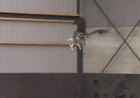 Dutch National Police Testing Out Birds To Capture Drones